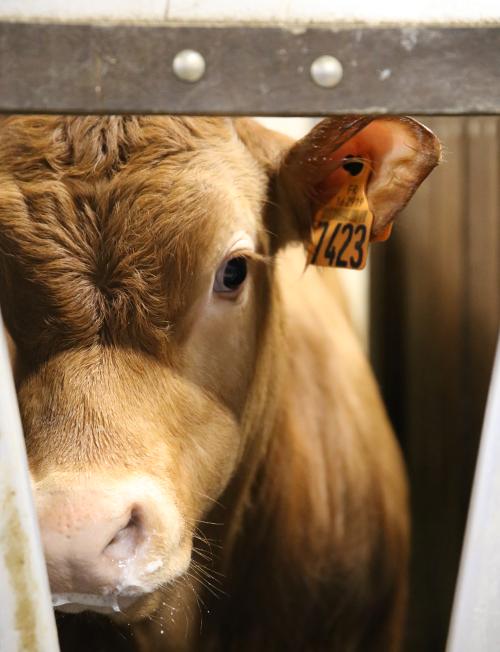 Reportage vidéo et photo d'Appaloosa en élevage